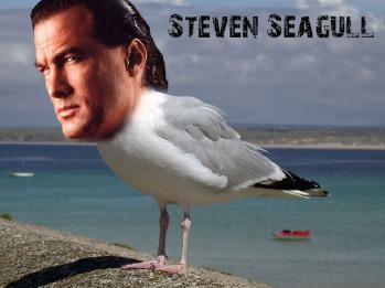 steven_seagull_by_kaijugroupie84-d6fxb7p