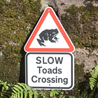 0006775_slow-toads-crossing-sign
