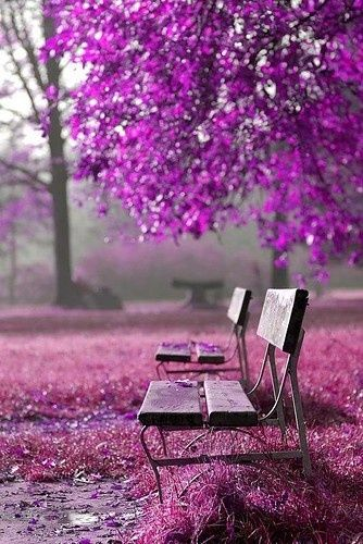 0a4fa64e98f8d069228562a772eb9396--purple-trees-purple-flowers