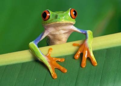 awkward frog