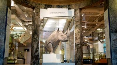 schad-rhino