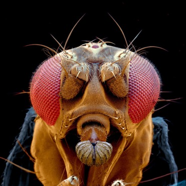 drosophila-fly-head-electron-microscope-spl